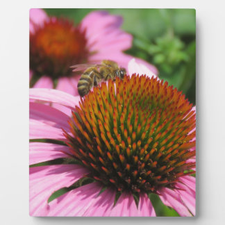 Purple Coneflower with Bee Plaques