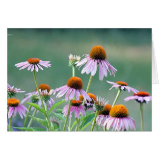 Purple coneflowers! card