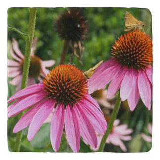 Purple coneflowers with butterfly trivet