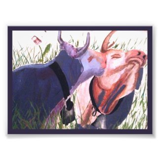 Purple Cow Kiss Photo Print