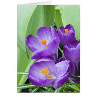Purple Crocus Blooms in Garden Card