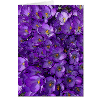 Purple Crocus Card
