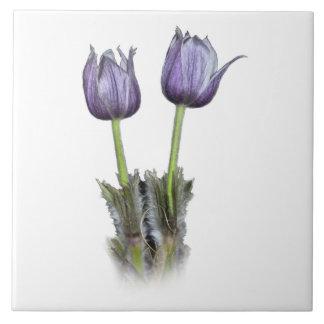 Purple Crocus Flowers Ceramic Tile