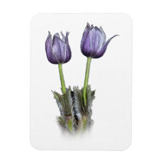 Purple Crocus Flowers Rectangular Photo Magnet