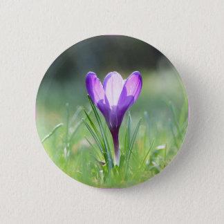 Purple Crocus in spring 03.3 2 Inch Round Button