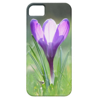 Purple Crocus in spring 03.3 Case For The iPhone 5