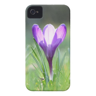 Purple Crocus in spring 03.3 iPhone 4 Cases