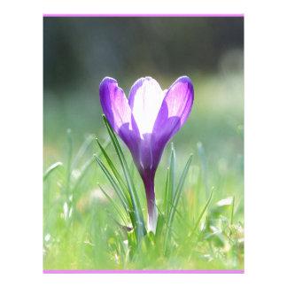Purple Crocus in spring 03.3 Letterhead