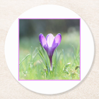 Purple Crocus in spring 03.3 Round Paper Coaster