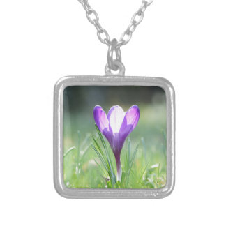 Purple Crocus in spring 03.3 Silver Plated Necklace