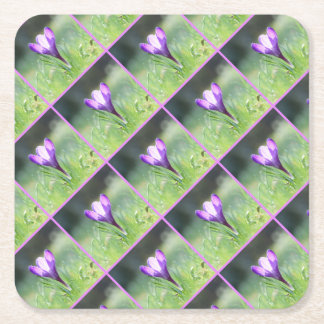 Purple Crocus in spring 03.3 Square Paper Coaster