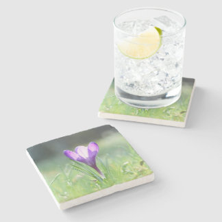 Purple Crocus in spring 03.3 Stone Coaster
