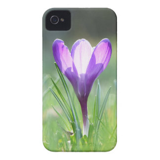 Purple Crocus in spring Case-Mate iPhone 4 Cases