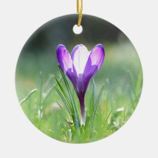 Purple Crocus in spring Ceramic Ornament