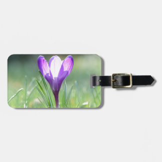 Purple Crocus in spring Luggage Tag