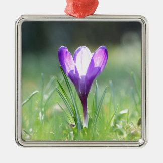 Purple Crocus in spring Metal Ornament