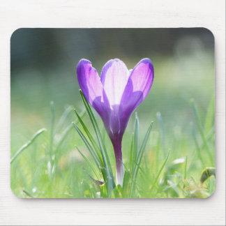 Purple Crocus in spring Mouse Pad
