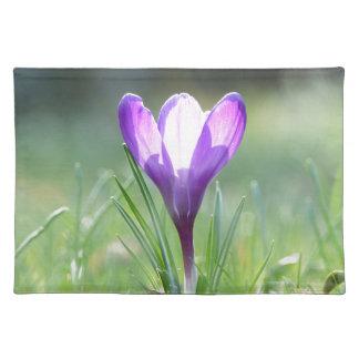 Purple Crocus in spring Placemat