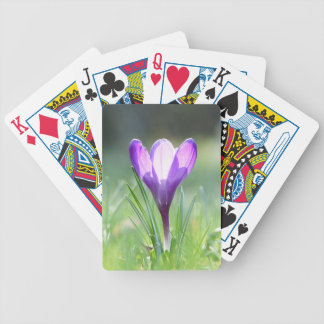 Purple Crocus in spring Poker Deck
