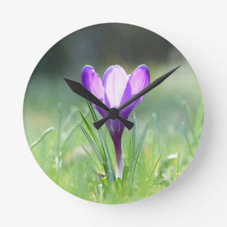 Purple Crocus in spring Round Clock