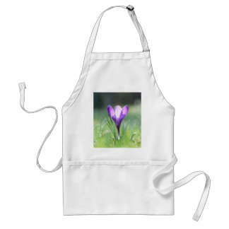 Purple Crocus in spring Standard Apron