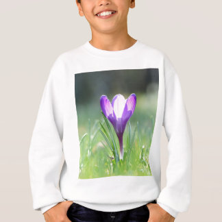 Purple Crocus in spring Sweatshirt