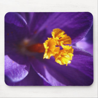Purple Crocus Mouse Pad