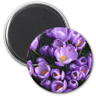 Purple Crocus Refrigerator Magnet