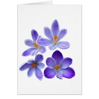 Purple crocuses 02 card
