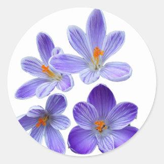 Purple crocuses 02 classic round sticker