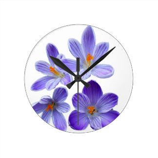 Purple crocuses 02 clocks