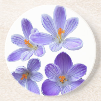 Purple crocuses 02 coaster