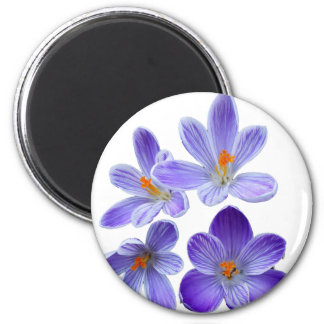 Purple crocuses 02 magnet