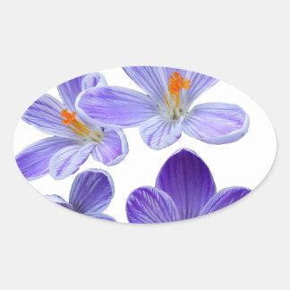 Purple crocuses 02 oval sticker