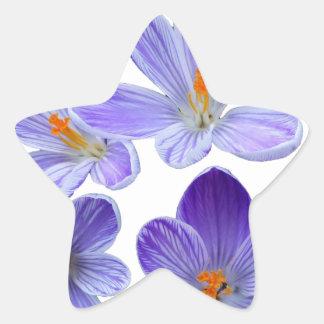 Purple crocuses 02 star sticker