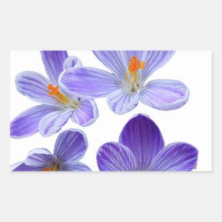 Purple crocuses 02 sticker