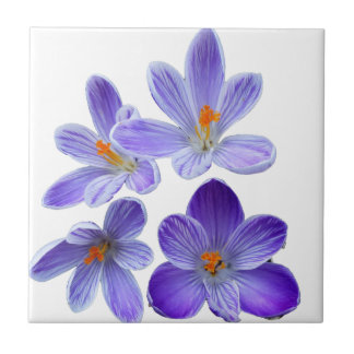 Purple crocuses 02 tile