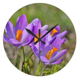 Purple crocuses clocks