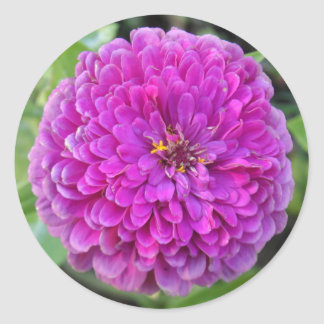 Purple Dahlia Classic Round Sticker