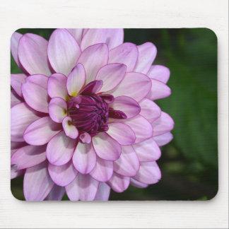 Purple dahlia flower blossoms mousepad