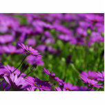 Purple Daisies Daisy Photo Cut Outs