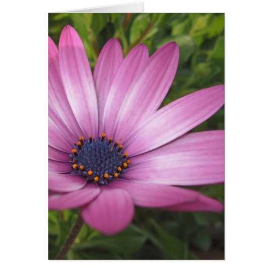 purple daisy card