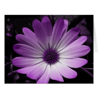 Purple Daisy Flower Jumbo Greeting Card