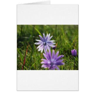 Purple daisy flowers on green background card