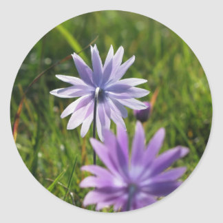 Purple daisy flowers on green background classic round sticker