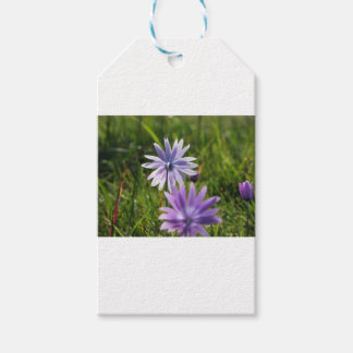 Purple daisy flowers on green background gift tags
