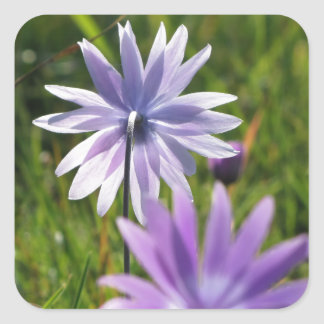 Purple daisy flowers on green background square sticker