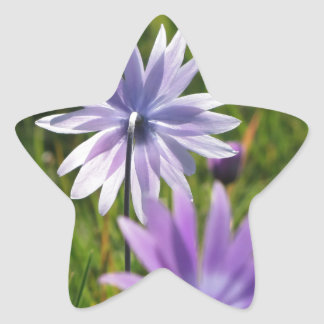 Purple daisy flowers on green background star sticker