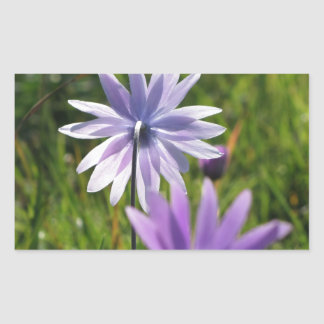 Purple daisy flowers on green background sticker