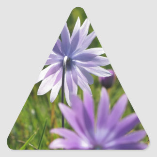 Purple daisy flowers on green background triangle sticker
